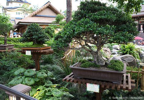 Bonsai Baum Pflanzen by Bonsai Baum Garten Letsgototour Club