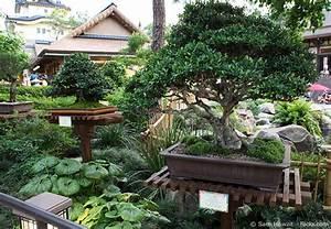 garten bonsai baum pflanzen pflegen garten hausxxl With feuerstelle garten mit bonsai baum erde