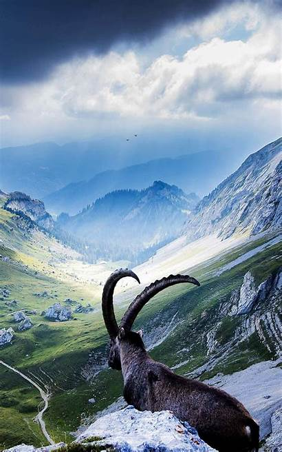 Kindle Fire Hdx Switzerland Pilatus Goat Hdwallpapers