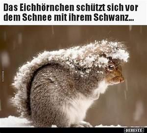 Sprüche Winter Schnee : das eichh rnchen sch tzt sich vor dem schnee mit ihrem lustige bilder spr che witze echt ~ Watch28wear.com Haus und Dekorationen