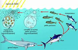 Ocean Food Chain Pictures to Pin on Pinterest - PinsDaddy