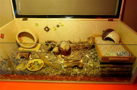 aquarium cages for hamsters 27 best images about hamster home and cage ideas on plastic bins hamsters and pot