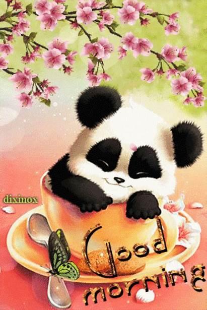 Panda Morning Sleeping Cup Quotes Hello Saturday