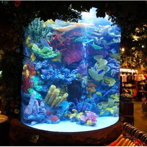 comment faire un aquarium eau de mer d 233 coration aquarium eau de mer