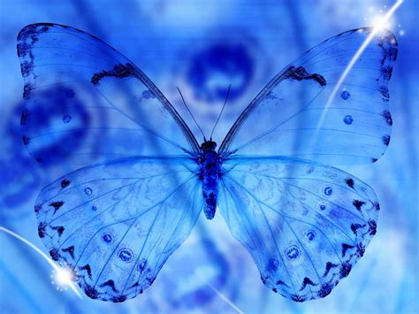 wallpapers blue butterfly art wallpapers
