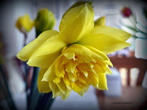 Pflanzen Im März by Fr 252 Hlingsblumen Pflanzen Das Sind Selektiv Waru