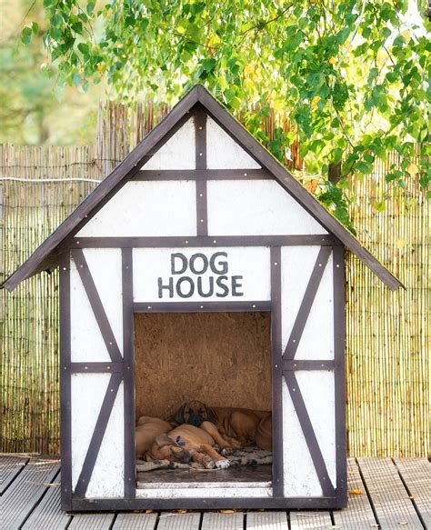 guide    indoor  outdoor dog house heater options