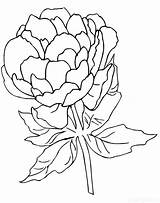 Peony Coloring Pages Print Raskraski Nature sketch template