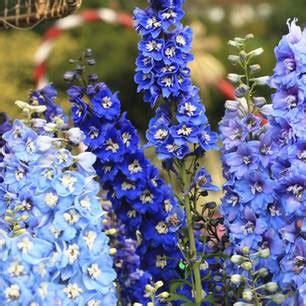 blaue pflanzen für den garten f 252 r balkon und garten blaue blumen und pflanzen brigitte de