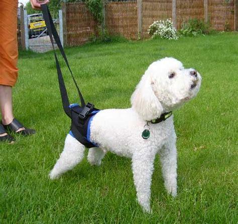 gehhilfe fuer hunde walkabout arkanum vitae