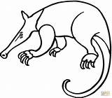 Anteater Coloring Pages Aardvark Drawing Giant Printable Anteaters Colouring Cliparts Clipart Adults Supercoloring Getcoloringpages Looking Drawings Getdrawings Designlooter Results Clipartbest sketch template