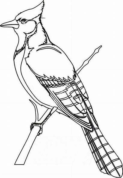 Coloring Pages Birds Winter Bird Printable Getcolorings