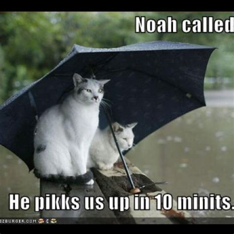 Rainy Day Meme - rainy day funnies pinterest rainy morning quotes funny and search