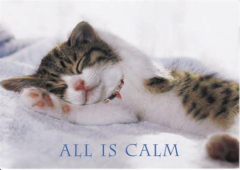 senior cat calm cooper brooke year