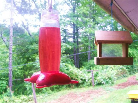 hummingbird syrup for feeders recipe food com