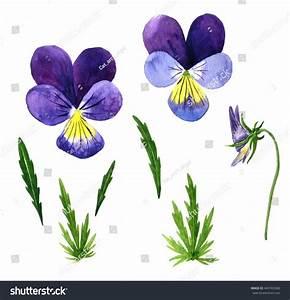Set Watercolor Drawing Violet Flowersbuds Leaves Stock ...