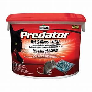 Produit Pour Tuer Les Souris : wilson granules de rodenticide tue rats et souris predator 900g r no d p t ~ Melissatoandfro.com Idées de Décoration