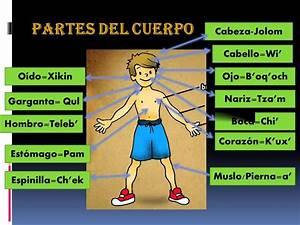 Partes Del Cuerpo Humano En Espa U00f1ol-k U2019ich U0026 39 E