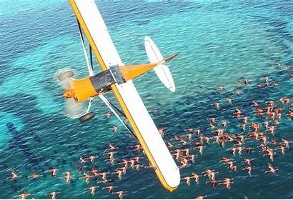 Simulator Flight Microsoft History Graphics Mspoweruser Spec