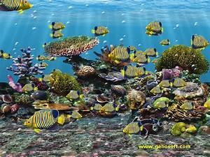 FREE 3D FISH TANK SCREENSAVER