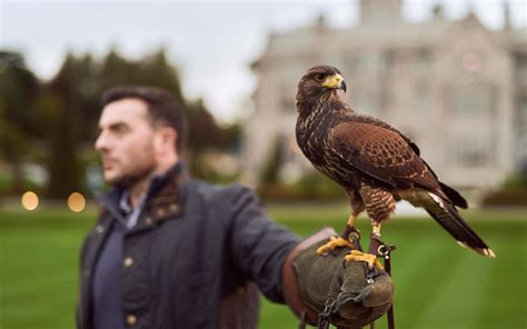 Falconry in Adare | Book Your Activity | Visit Adare Manor