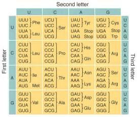 Image result for images genetic dna codes