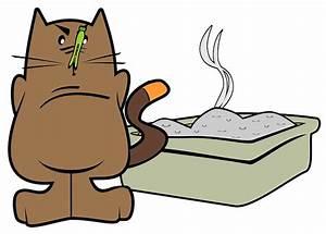 Odeur Urine Chat : comment repousser les chats naturellement ~ Maxctalentgroup.com Avis de Voitures