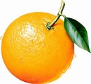 Library of fruit house graphic freeuse library png files ...