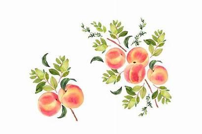 Peach Watercolor Peaches Clipart Fruit Tattoo Fruits