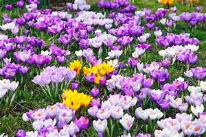 Was Sind Frühlingsblumen : fr hlingsblumen pflanzen ~ Whattoseeinmadrid.com Haus und Dekorationen