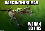 Image result for hang in there meme