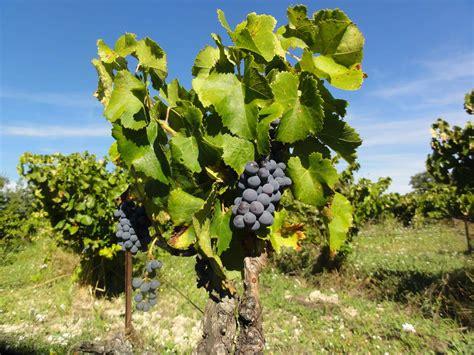 chambre d hotes bonnieux vins et vignobles provence luberon le clos des lavandes