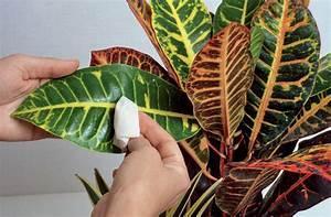 Plante D Intérieur Haute : plantes d int rieur plante verte int rieur d tente jardin ~ Dode.kayakingforconservation.com Idées de Décoration