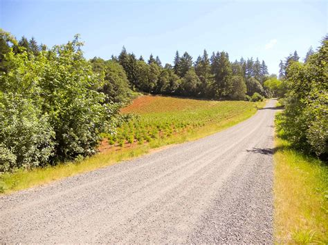 christmas tree farm for sale tree farm property for sale in oregon