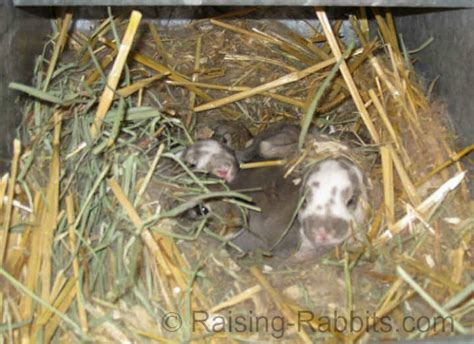 Pine Bedding For Rabbits by Pine Shavings Understand The About Softwood Shavings