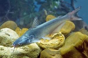 Catfish, Sunfish & Bass Fish Stocking in Texas   Kenneth ...