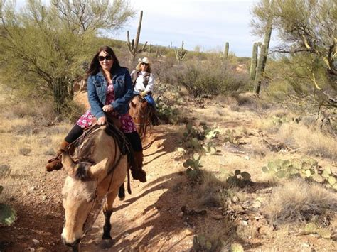 riding horseback arizona horse park tucson saguaro national bobbie trail houston experience tripadvisor