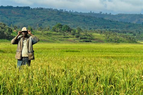 irin burundis land conundrum