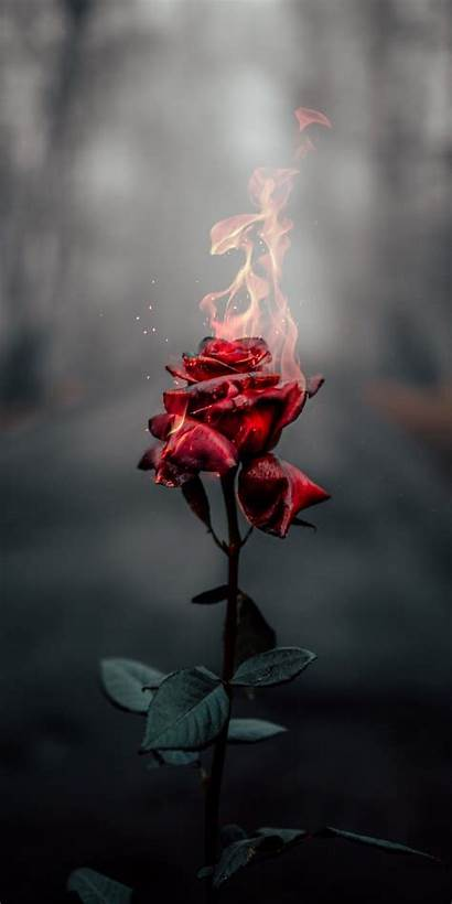Fire Aesthetic Wallpapers Rose
