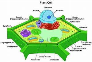 Why Is Photosynthesis Important  8 Things You Need To Know