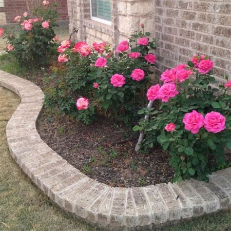 bush garden ideas lauren wants pink rose bushes in the front yard for the house pinterest to be roses and