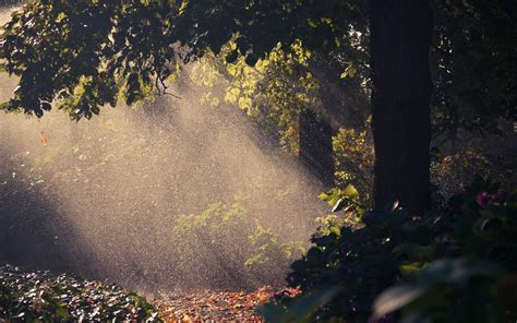 Летний дождь в лесу  обои для рабочего стола, картинки, фото