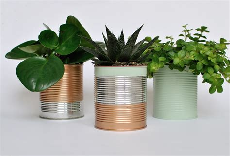 garden in a can 13 amazing ideas for your indoor plants the garden