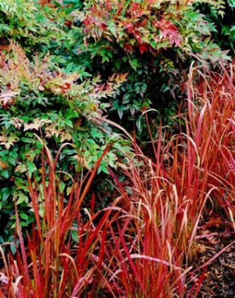 Asian Gardens Grass Valley by Clatter Valley More From Nybg S The Word