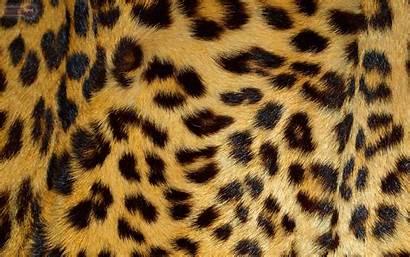 Leopard Cheetah Animal Backgrounds Wallpapers Desktop Skin