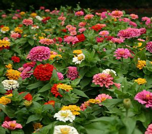 how to grow flowers growing for market how to start a flower growing business profitable plants