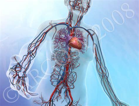 Circulatory Animation And Illustration