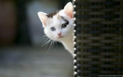 Cats Cat Wallpapers Kitten Sweet Animals Computer