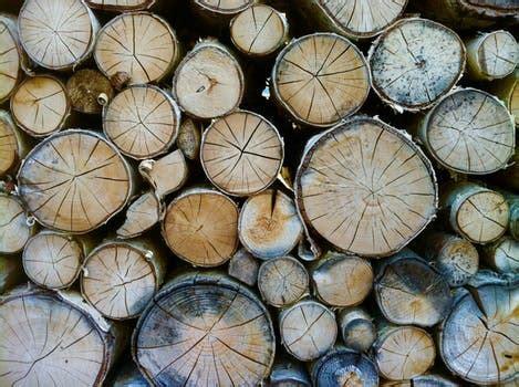 stock photo  bark black  white branches