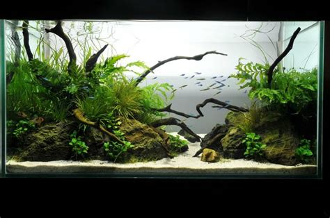 Aquascaping Forum by Ideas For 180 Gallon Aquascape The Planted Tank Forum